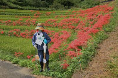 旅するイルカ♪ 再び 奈良 明日香村 棚田へ