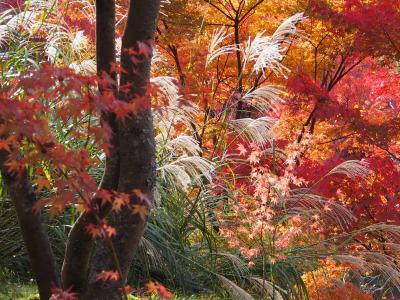 秋はやっぱり京都でしょっ! 6