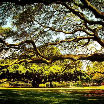 インスタ写真で振り返るハワイ大好きスポット