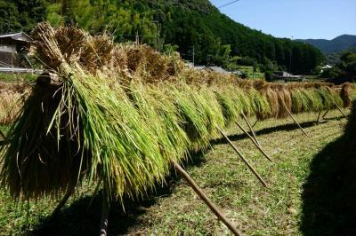 和歌山農家民泊でグリーンツーリズム体験
