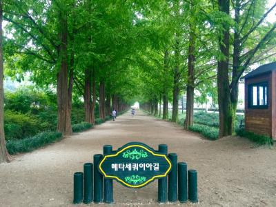 シルバーウィーク③海南(ヘナム)・大興寺~潭陽(タミャン)