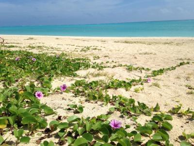 与論の碧い海!百合が浜へ二泊三日の旅