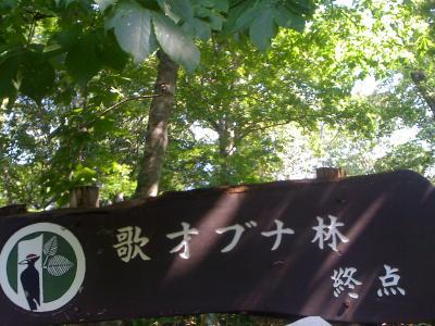 自然の豊かな黒松内でブナ散策