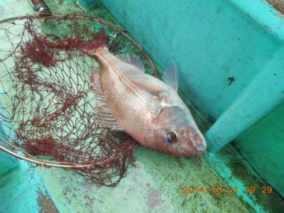 安房丸釣り日記2015-10
