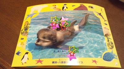 シーパラ イルカと泳ぐ