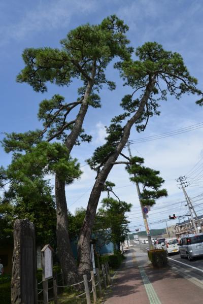 おくのほそ道 第1回 ⑨ 武隈の松・末の松山・沖の石?宝国寺・多賀城跡・壺の碑