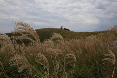 旅するイルカ♪ 和歌山県 生石高原~あらぎ島へ