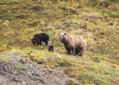 2015年アラスカ Denali N.PとAnchorage③デナリ国立公園2日目 園内シャトルバス