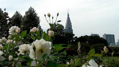 アラ50姉妹 神宮外苑から新宿御苑 2015秋の散歩