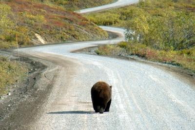 アラスカ&メキシコの旅★デナリ国立公園