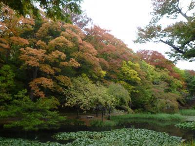 紅葉始めの千秋公園