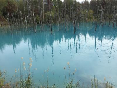 今年も秋の北海道ーまずは美瑛・青い池ははずせない