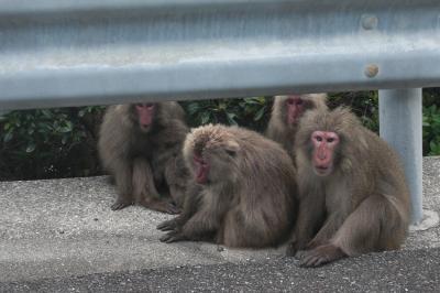 鹿児島から屋久島までゆる~い旅4 屋久島ドライブ
