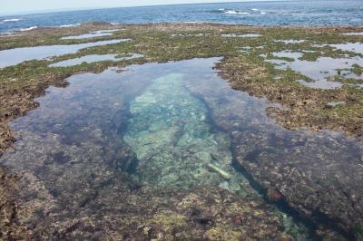 鹿児島から屋久島のゆる~い旅6 まだある屋久島の見どころ