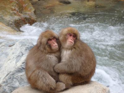 志賀高原の紅葉ドライブと上林温泉「湯宿せきや」にスノーモンキー