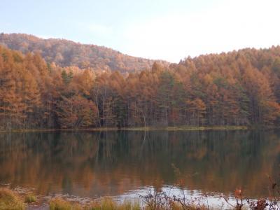 秋も深まりました vol1