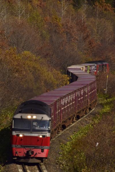 """秋の北海道、道東地方を巡る旅 ~紅葉の中を走る石北本線の""""タマネギ列車""""、石北貨物を追いかけて~"""