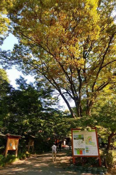 小石川後楽園に秋を探しに行きました