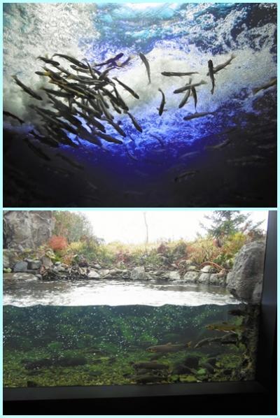 大荒れの北海道~1 旭川から温根湯温泉へ