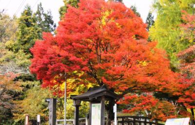真っ赤な楓の絨毯に彩られる紅葉の名所「土津神社」の美しさに感動しました。