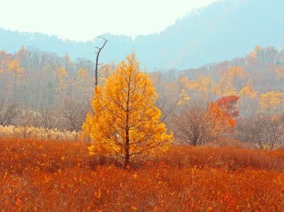 晴れた朝には散歩に行こう♪秋色☆パッチワークの日光へ