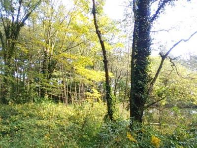 日曜日の秋が瀬公園