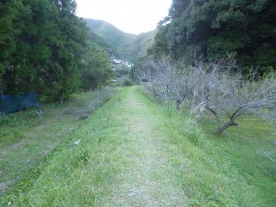熊野古道中辺路を歩く1