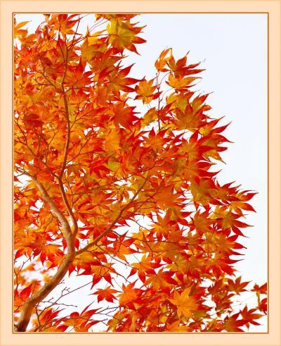 Solitary Journey[1667]山々が最も輝く季節。山肌の草木や樹木が秋色に染まっていました。<もみのき森林公園>広島県廿日市市
