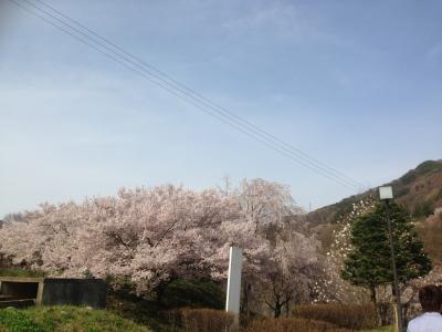 桜咲く高遠~、美味しいものと昼神温泉~♪