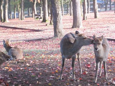 奈良*なら紅葉が見頃かも~と出かけました【奈良公園・みたらい渓谷・(三重)さるびの温泉】