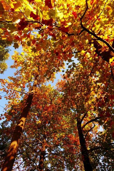 板橋区立・赤塚植物園に秋を探して