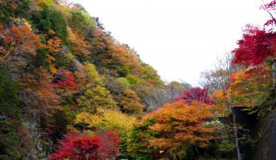みたらい渓谷の紅葉がピーク 渋滞もピーク