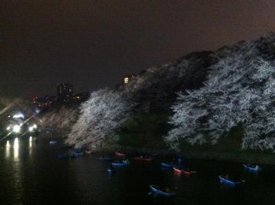 """千鳥ヶ淵周辺 お花見 """"Headache Master School 2013 in Asia""""の夜"""