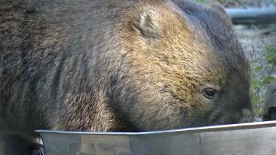 五月山動物園を散策・・・多くの園児達も見学していました。