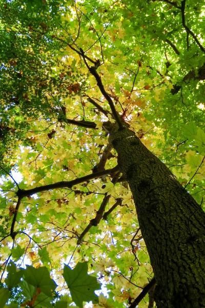 板橋区立・赤塚植物園に秋を探して 2