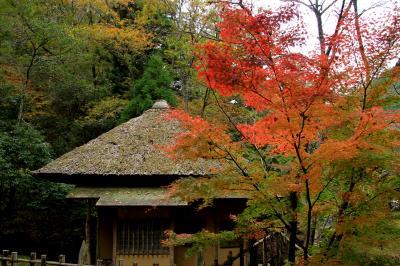 旧閑谷学校の紅葉 お目当ての櫂の木の紅葉は!!!、でも見頃で綺麗な紅葉が楽しめました。
