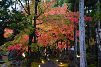京都紅葉情報 鷹峯しょうざんリゾート北庭の見事な紅葉 2015年11月8日
