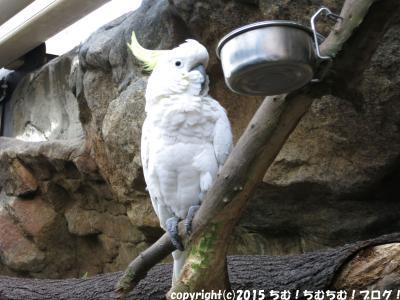 ケアンズの新婚旅行第3日目!グリーン島とケアンズドーム動物園