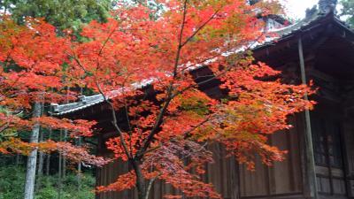 丹波の紅葉巡り(08) 市島町・・・白毫寺の仏像と紅葉。
