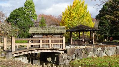 丹波の紅葉巡り(10) 山南町・・・ 薬草薬樹公園の紅葉。