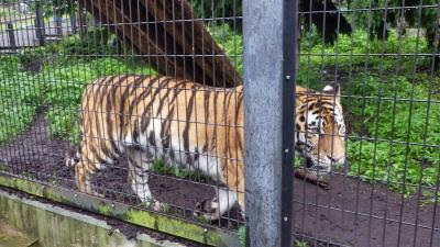2015北海道 まだ降っとります がお~ 神威古潭 旭山動物園 蜂屋