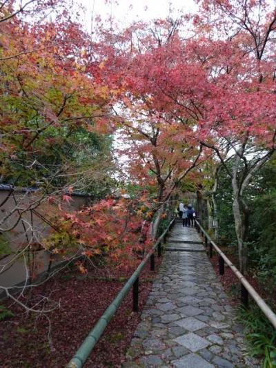京都の紅葉バスツアー② しょうざんリゾートと鷹ヶ峯寺院めぐり