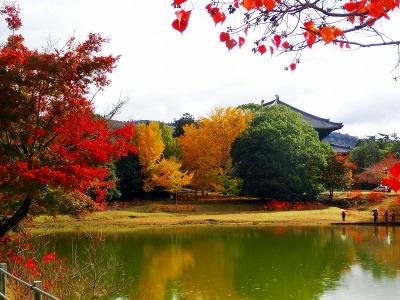 奈良旅行2日目:大仏池