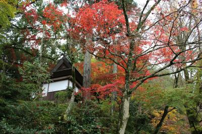 河内の瀧谷不動尊から楠木正成ゆかりの地、千早赤阪までを歩く
