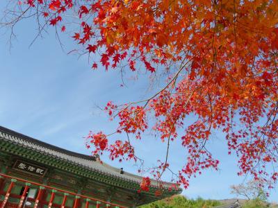お寺と紅葉で自然を愉しむ&マッサージとナッチポックンで身も心もスッキリ!【釜山の旅:2日目】