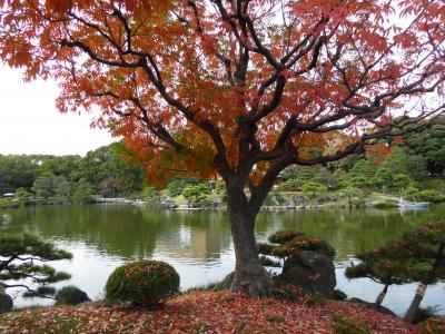 秋の「清澄庭園」♪