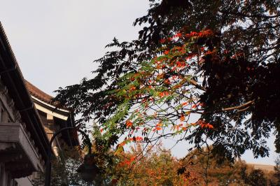 トーハク「秋の庭園開放」