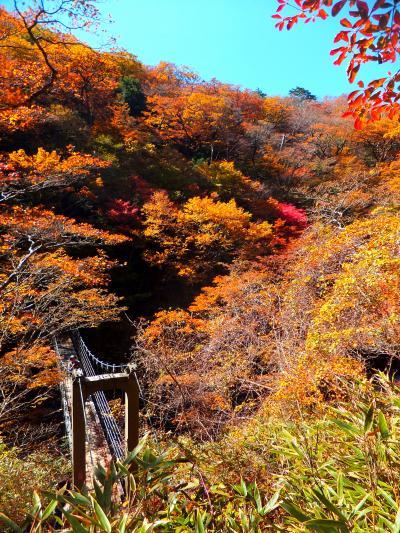 2015年10月 さわやか!大台ケ原で紅葉ハイキングだにゃん(後編・シオカラ谷)