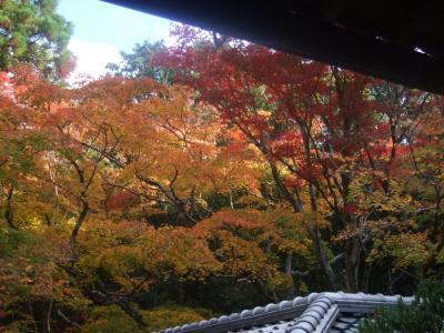 京都鷹峯の紅葉を訪ねて(2015/11)