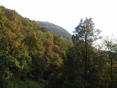 スイスで秋、みーつけた!ルガーノでのお散歩【スイス情報.com】